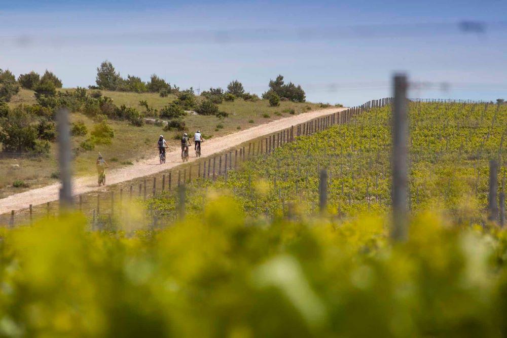 Bike and Wine - True taste of Dalmatia